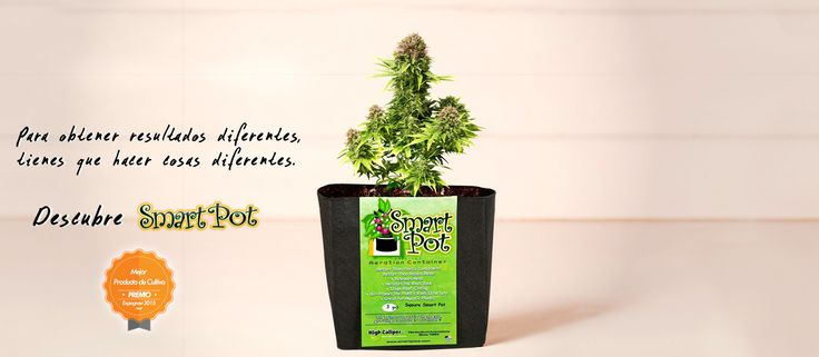 Root pruning, Higher yields, Bigger harvest, Big plants, Container, Fabric container, Indoor growing, Outdoor growing, Re-useable, Made In the USA