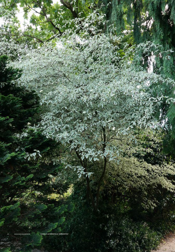 112 best bomen images on pinterest - Riet voor struik ...