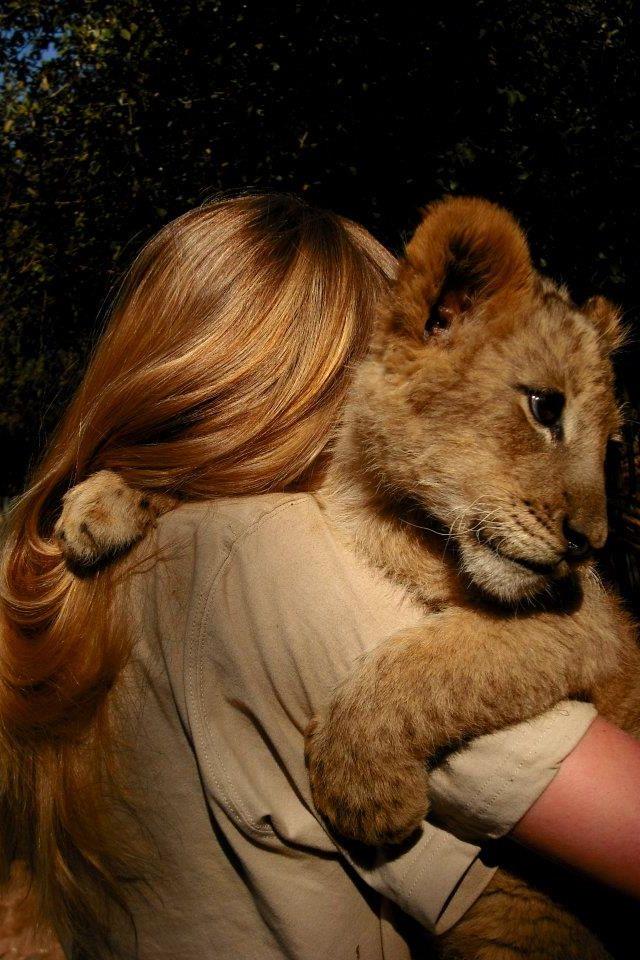 "Lion Cub: ""Cuddles & Love!"""