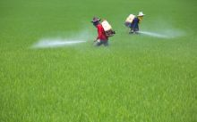 Bt pesticide, in addition to Monsanto's best-selling herbicide Roundup, exhibit direct toxicity to human human cells.