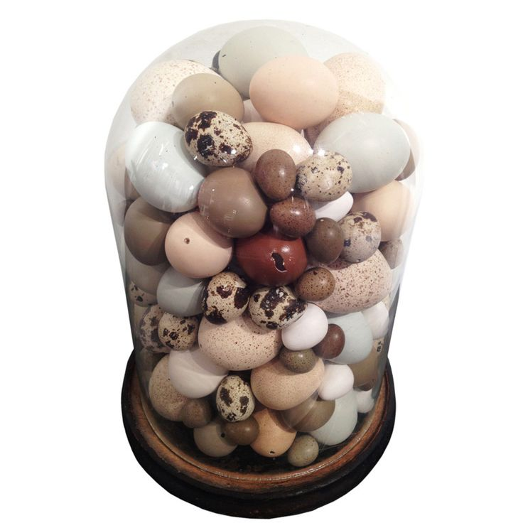 1stdibs - Rare Victorian Collection Of Different Bird's Eggs. explore items from 1,700  global dealers at 1stdibs.com