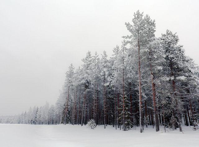 ☆ Winter.