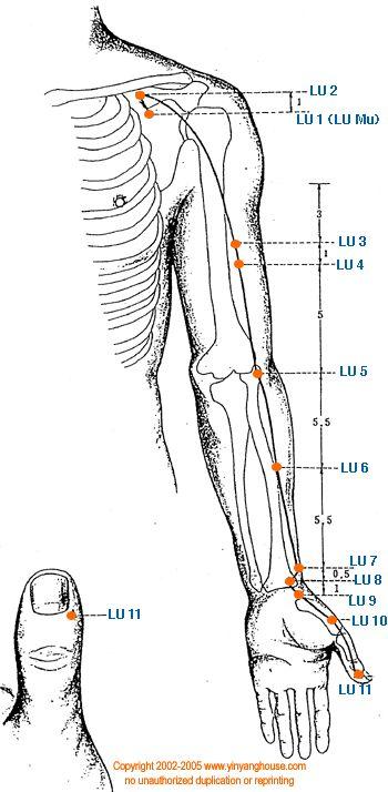 (LU) Lung Meridian - Graphic | Yin Yang House