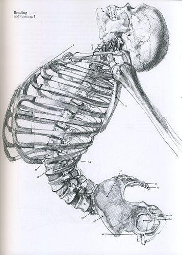 John Raynes...figure drawing & anatomy