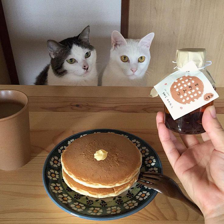 休みやのに早く起こされたし…。 お友達がくれた#甘納豆かわむら の、まめみつ◡̈⃝︎⋆︎* ほんの〜り小豆の味する♩ちょっと餡子トッピングした的なお得感あり♩ #八おこめ #ねこ部 #cat #ねこ #八おこめ食べ物