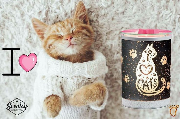 Is this not the cutest warmer you've ever seen! I absolutely LOVE CATS!!! New warmer for the Spring & SUmmer catalog for Scentsy - Shop online or join my team here: https://lisarucker.scentsy.us it will ship directly to you!