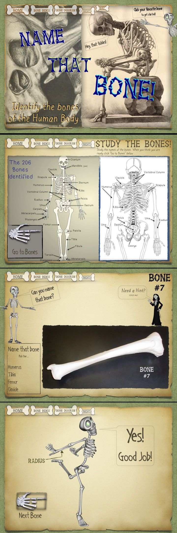 A fun way for students to learn the basic bones of the Human Body.  Works great on an iPad or any device.