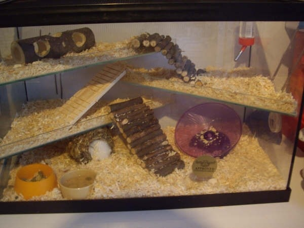 Large Hamster Cages http://evobig.blogspot.com/2012/08/inilah-kandang-ideal-untuk-hamster.html