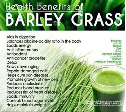 Pin By Rick Gorospe On Barley Grass Barley Health Benefits Coconut Milk Nutrition Barley Benefits