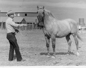 28 Best Skipper W S Horses Images On Pinterest American