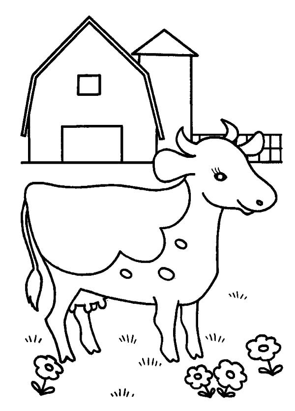 Cows Cows At Barn Yard Coloring Pages Farm Coloring Pages