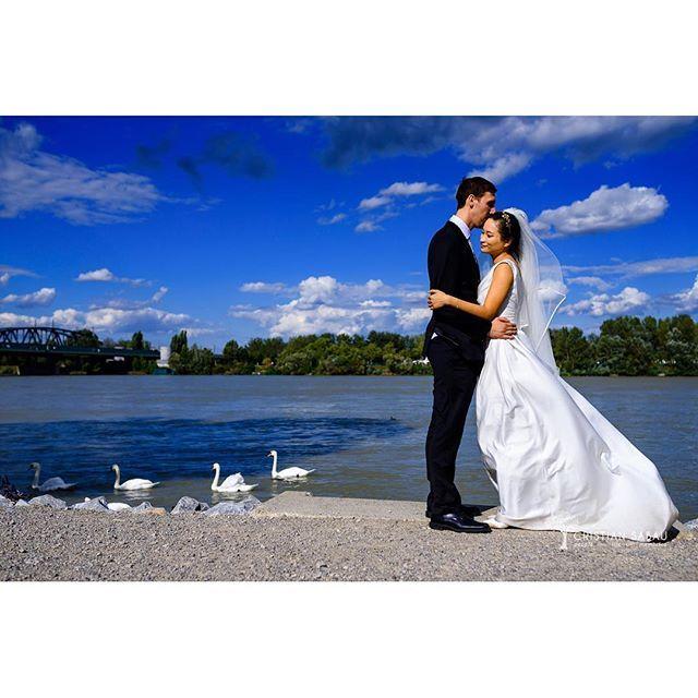Danube Love   www.cristians.ro . . #weddingday #huffpostido #instawed #instalove #destinationweddingphotographer #austriawedding #austria #nikond750 #bride #pin #groom #thesecondshot #aotss #wed_stars #yourockphotographer #hochzeitfotograf #weddinginspiration #viennawedding #ig_vienna #ig_austria #nikonartists #vienna #wien #danube #swan #fearlessphotographers