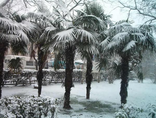 10 best images about real palm trees snow palm trees for Home zone wallpaper birmingham