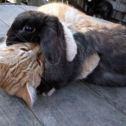 Kitty and bunny love each other!: Cute Animal, Cat, Bears Hug, Animal Pictures, Best Friends, Funny Bunnies, Hilarious Animal, Animal Friends, Kitty