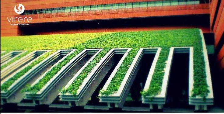 I tetti verdi, sono tipi di coperture che utilizzano terra o un altro tipo di substrato e vegetali, al posto delle classiche tegole, rappresentano una soluzione innovativa di grande qualità estetica in grado di dare nuova vita al tetto o al terrazzo di casa, migliorare l'estetica del quartiere,valorizzare l'edificio e  risparmiare in bolletta. Leggi l'articolo sul nostro blog. http://vireresrls.tumblr.com/post/155443138519/tettiverdi-vantaggi  #lichene #greenwall #tettiverdi #verticalgreen