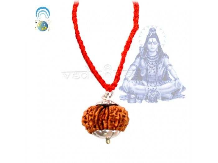 Fifteen Mukhi Rudraksha Beads Online | Vedicvaani.com, India's most trusted brand in authentic genuine rudraksha beads online, Free worldwide shipping.