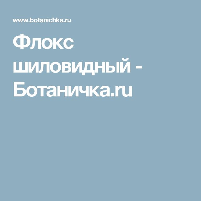Флокс шиловидный - Ботаничка.ru