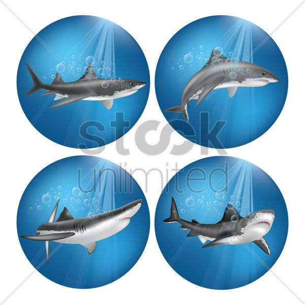 set of sharks vector graphic