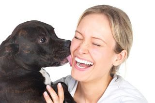 Dog training DIY: Why does your dog lick your face