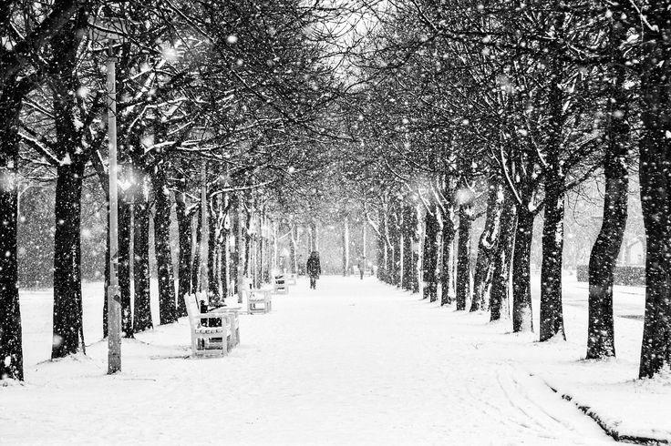 "winter alley - Park ""Großer Garten"" in my hometown Dresden"