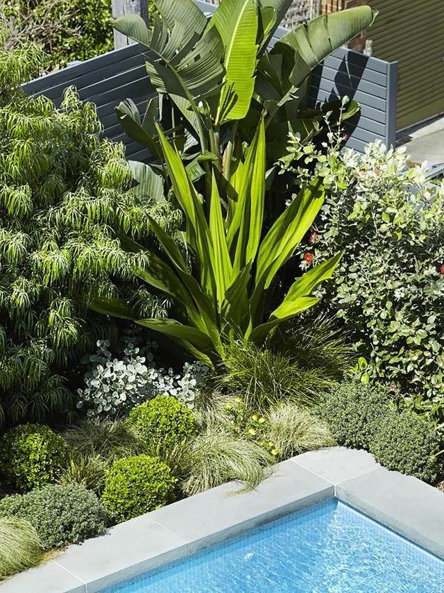 Bare Backyard Transformed Into A Contemporary Coastal Garden Architectural Plants Coastal Gardens Screen Plants