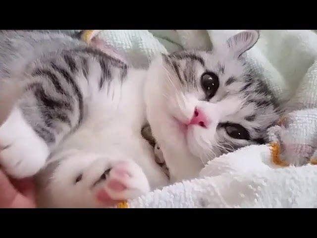 Pin On Crying Cat Meme