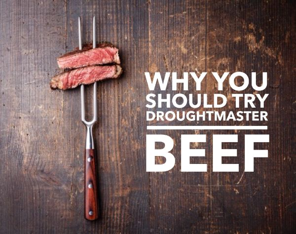 Why you should try Droughtmaster Beef? meat, delicious, BBQ, Aussie, Aussie classic, Beef