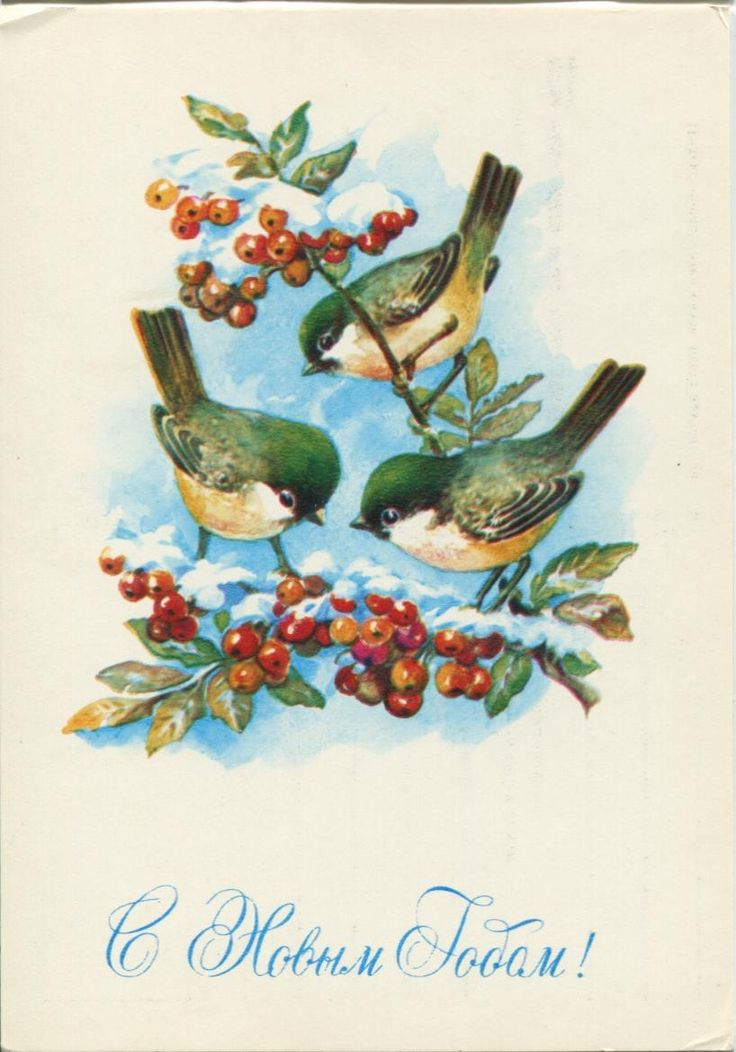 Happy New Year postcard - birds - Soviet postcard