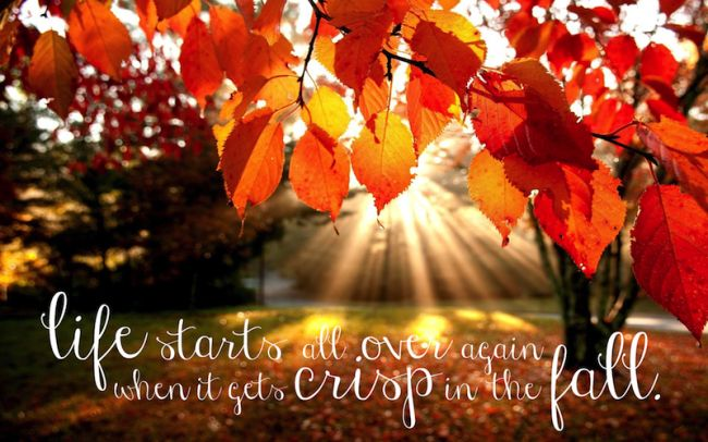 "Freebie Friday - F. Scott Fitzgerald quote printable - ""Life starts all over again when it gets crisp in the fall."""