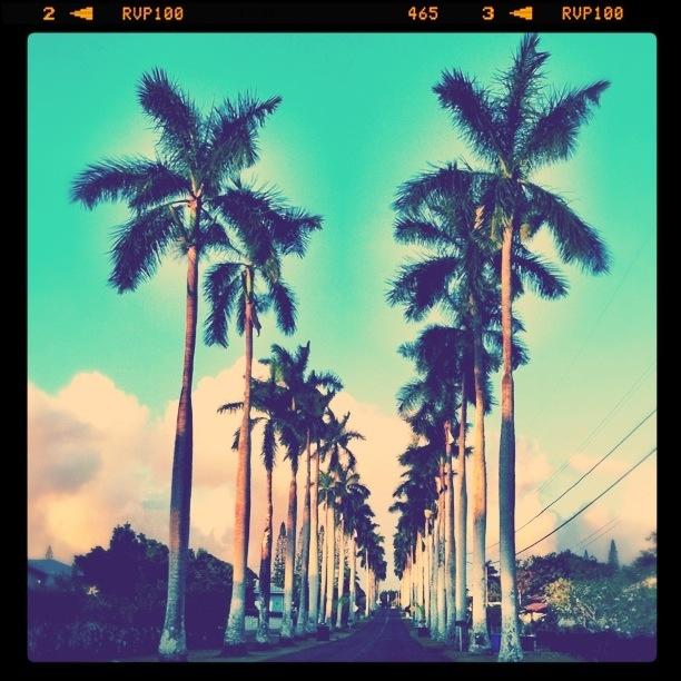 Peaceful Places In Hawaii: Royal Palm Drive. Wahiawa, Hawaii