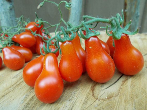 Cherry Tomato Seed Red Pear Heirloom Tomato Seeds organic