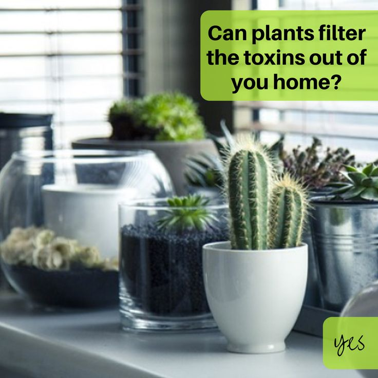 Reducing toxic chemicals in your environment is easier than you think! Find out how - Join us JULY 28th BRISBANE http://amp.gs/Z7jF