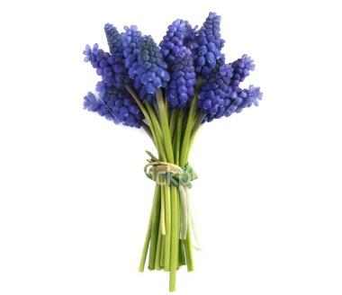 Mmm...blue grape hyacinth...