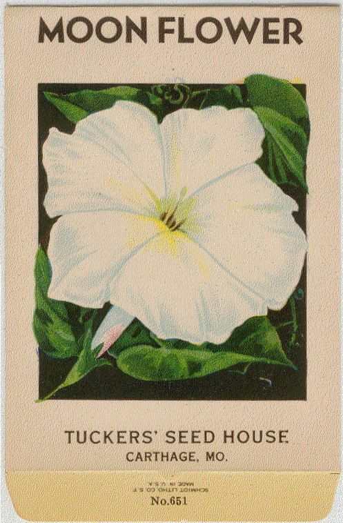 Vintage Flower Seed Packet Tuckers Lithograph White by dvioletlady, $5.95