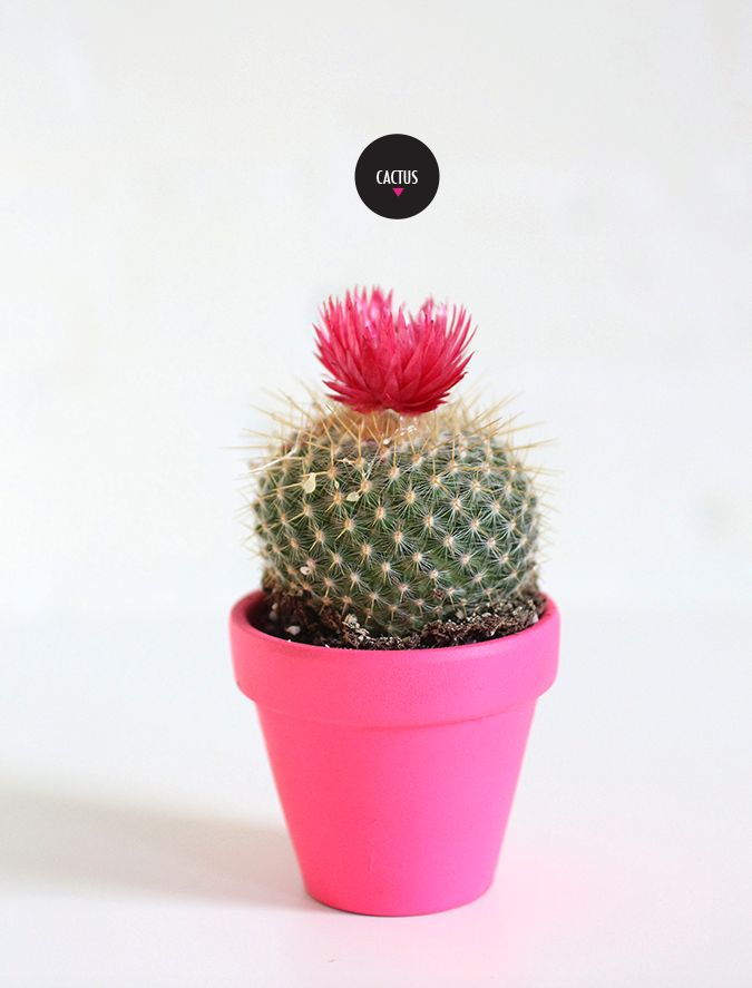 5 Indoor House Plants that are basically impossible to Kill   The cactus—pretty hard to kill, but read this care guide just in case...