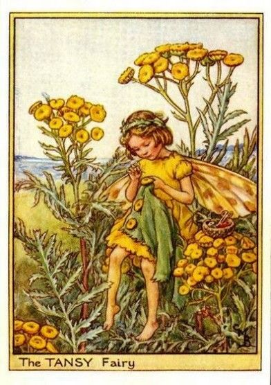 Tansy Flower Fairy Vintage Print by Cicely Mary Barker, first published in London by Blackie, 1948 in Flower Fairies of the Wayside.