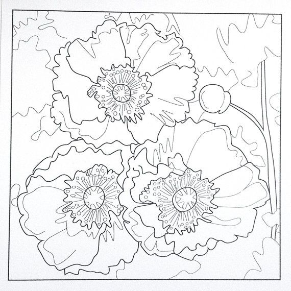 poppies coloring page poppy coloring sheet by favoriteflower