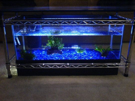 14 best diy aquarium furniture images on pinterest | fish tank