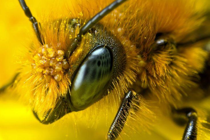 Depuis avril 2014, la population d'abeilles a diminué de 40 à 60%