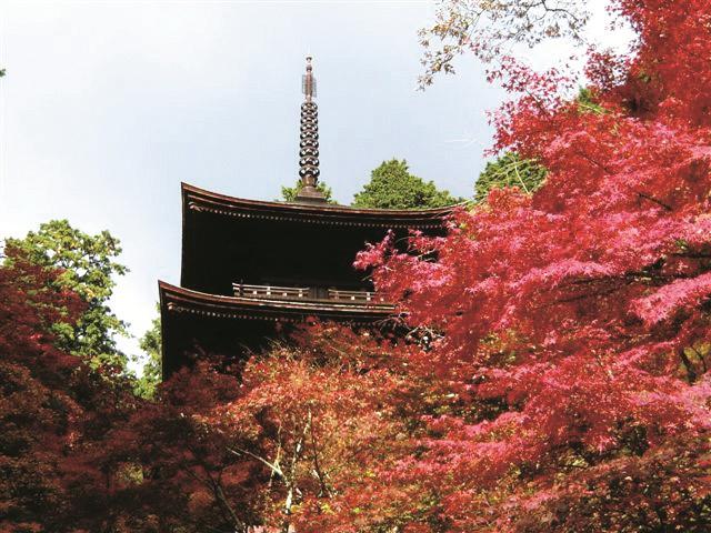 秋の紅葉に染まる金剛輪寺。