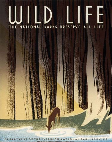 Wild Life: The National Parks Preserve All Life | A WPA Federal Art Project poster for the National Park Service showing a deer drinking from a forest stream. 'Wild Life. The National Parks Preserve All Life.' Illustrated by Frank S. Nicholson, c. 1940.