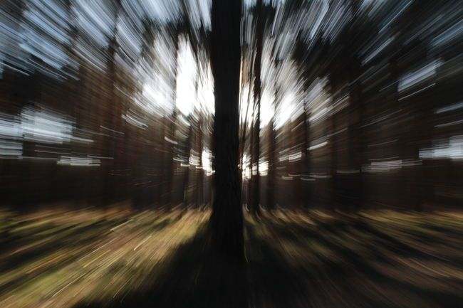 Momentum Day Forest Motion Nature Rush Speed Tree Zoomeffect