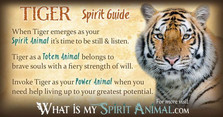 """Tiger Symbolism & Meaning - My spirit animal was characterized as """"feline"""" & then divided - tiger was the most, lion next, snow leopard, then leopard. I find that very interesting since tigers have always been one of my favorite animals."""