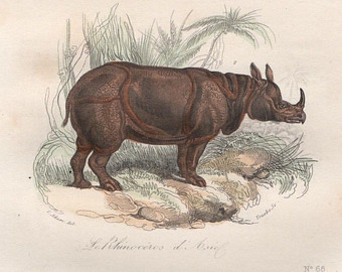 1860 rinoceronte di animale asia stampa originale mano animali safari antichi colorata incisione - buffon storia naturale cuvier