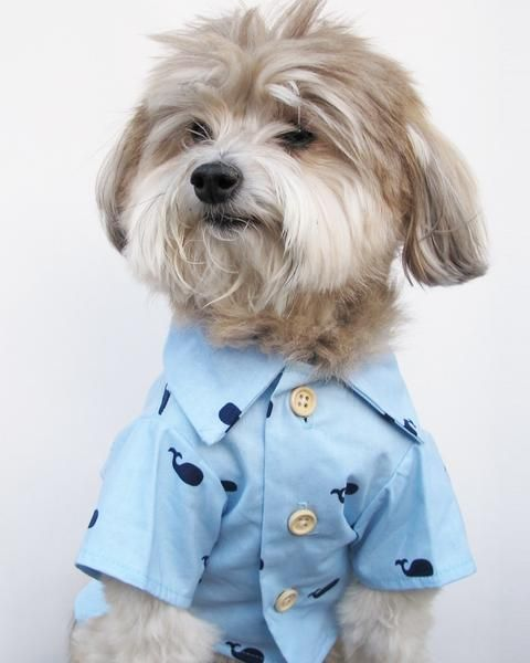 eb0d89e5 Baby Beluga BBQ Shirt | Dogs in clothes | Cute dog clothes, Dogs ...