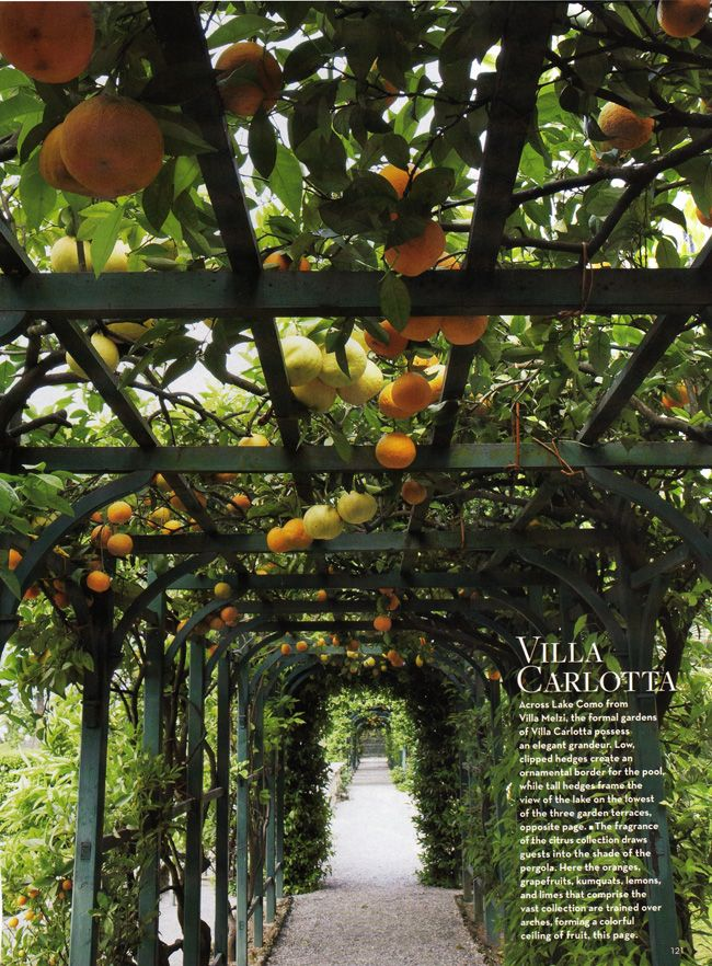 lemon and orange grove - must smell amazing! Villa Carlotta