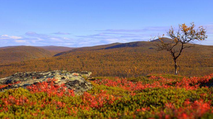 Photo by NorthernLightsInari @InariLights September #Muotkatunturi #wilderness area is 1 570 sq.km hiker´s paradise in #Inari #trekking #hiking #Lapland #filmlapland #arcticshooting