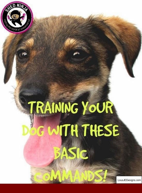 How To Train Your Dog To Come To His Name And Pics Of How To