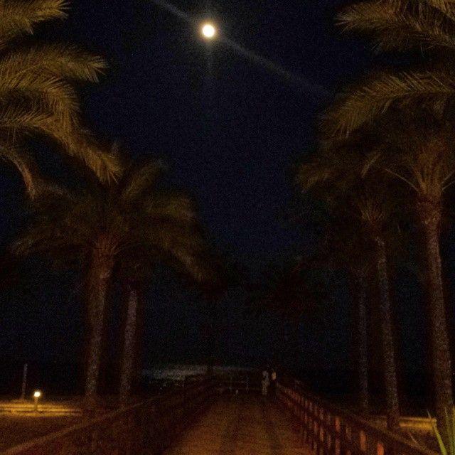 #Playa de #Botavara de #noche. Tercera imagen de las #palmeras con #mar de fondo y la #luna iluminando ligeramente. #Benicàssim #Benifornia #Benicassimparaiso #mediterraneo #instagramers #instagood #lovely