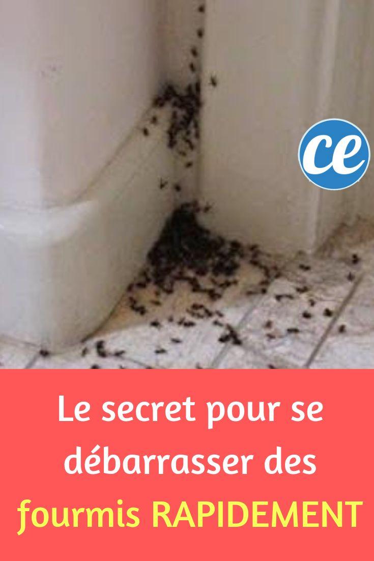 Le Secret Pour Se Débarrasser des Fourmis Rapidement.